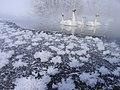 フロストフラワー(Frost Flower) - panoramio.jpg