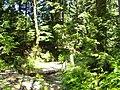 原始森林 - panoramio - 天王星.jpg