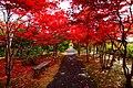 平岡樹芸センター(Hiraoka arboriculture center) - panoramio (9).jpg