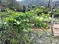 新丰司茅坪林场20150412 - panoramio (74).jpg