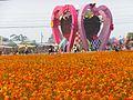 新社花海 Xinshe Flower Carpet Festival - panoramio.jpg