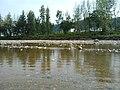 杨店村 2012夏 景色 - panoramio (6).jpg