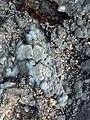 煤、原油等地(水)下可燃烧物的形成过程2.jpg