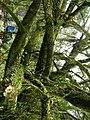 綠幹 Green Trunks - panoramio.jpg