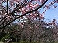 香川県丸亀市丸亀城 - panoramio (52).jpg