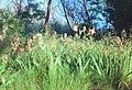 03-17-05, flowers - panoramio.jpg