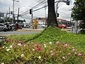 0305jfOrtigas Avenue Santolan Road Streets Landmarks San Juan Quezon Cityfvf 08.jpg