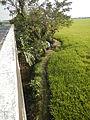 03790jfPaddy fields grasslands village Baliuag Bulacan Candaba Pampanga Bridge Roadfvf 16.JPG
