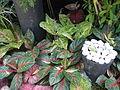05593jfMidyear Orchid Exhibits Quezon Cityfvf 02.JPG