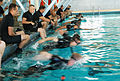 060823-N-IU892-016.San Diego (Aug. 23, 2006) - Search and Rescue (SAR) Swimmers from various commands in the 3rd Fleet area compete in the swimming event of Surface Line Week (SLW). For 25 years, San Diego area 060823-N-IU892-016.jpg