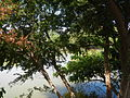 07950jfPampanga River banks Candelaria Welcome Calumpit Bulacan Roadsfvf 08.JPG