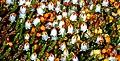1024 Arktisch-alpiner Garten Chemnitz - - --0967.jpg