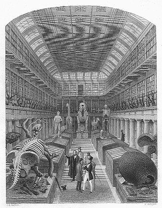 Royal College of Surgeons of England - Image: 1853 Hunterian Museum