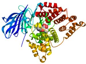 Leukotriene-A4 hydrolase