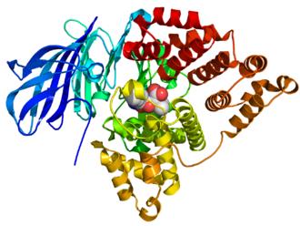Leukotriene-A4 hydrolase - Image: 1HS6