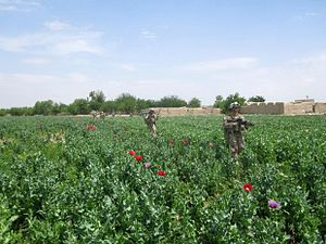 1st Battalion, 7th Marines - 1/7 Marines patrol through a field in Sangin district, April 2012.