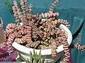 2010. Выставка цветов в Донецке на день города 65.jpg