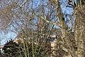 2012.02.26.123448 Baum Dom Schwerin.jpg