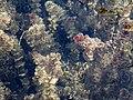20130608 Plitvice Lakes National Park 310.jpg