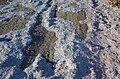 2014. Уничтоженные гривны в Донецке 021.jpg