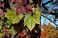 2015-365-281 All The Leaves (22057652551).jpg