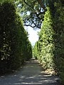 2017-06-20 Giardino di Boboli 34.jpg