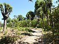 2017-06-20 Giardino di Boboli 78.jpg