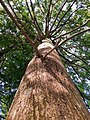 20190716 092023 Florida Cypress Tree.jpg