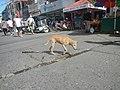 2644Baliuag, Bulacan Poblacion Proper 64.jpg