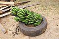 2DU Kenya24 (5367336734).jpg