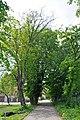 46-215-5010 Bortnyky Lindens RB 18.jpg