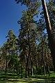 71-249-5005 Dakhnivka Pines SAM 7335.jpg