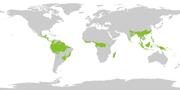 The rainforest belt around the earth