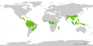 Tropical and subtropical moist broadleaf forests - General distribution of tropical moist forests