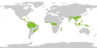 Distribuzione della foresta pluviale tropicale