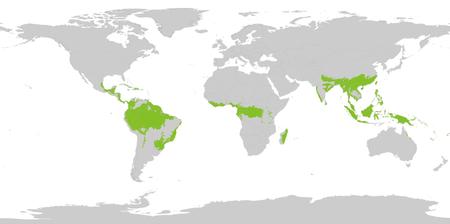 Rừng mưa nhiệt đới