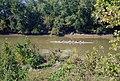 A4j006 9mp rowing near Towhead Island (6371337665).jpg