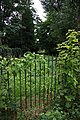 A Curious Green Corridor - geograph.org.uk - 917938.jpg