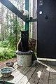 A cat in Ushkovo.jpg