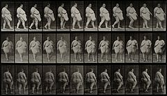 A gargantuan woman walking. Photogravure after Eadweard Muyb Wellcome V0048622.jpg