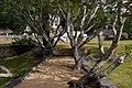 A path way to Yapahuwa.jpg