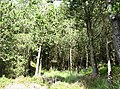 A small forest clearing - geograph.org.uk - 540354.jpg