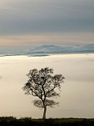 A tree above the clouds (geograph 2785847).jpg