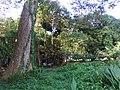 A tree near Sakhibata, Kendrapara.JPG