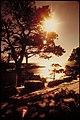 Acadia National Park, Maine (f55211b6-bbdc-412f-b429-df3987117cef).jpg