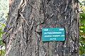 Acharya Jagadish Chandra Bose Indian Botanic Garden - Howrah 2011-01-08 9796.JPG