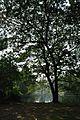 Acharya Jagadish Chandra Bose Indian Botanic Garden - Howrah 2011-01-08 9858.JPG