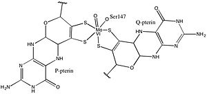 DMSO reductase - Image: Activesite