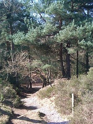 Addington Hills - A path across Addington Hills