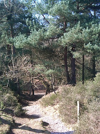 Addington Hills - A path across Addington Hills